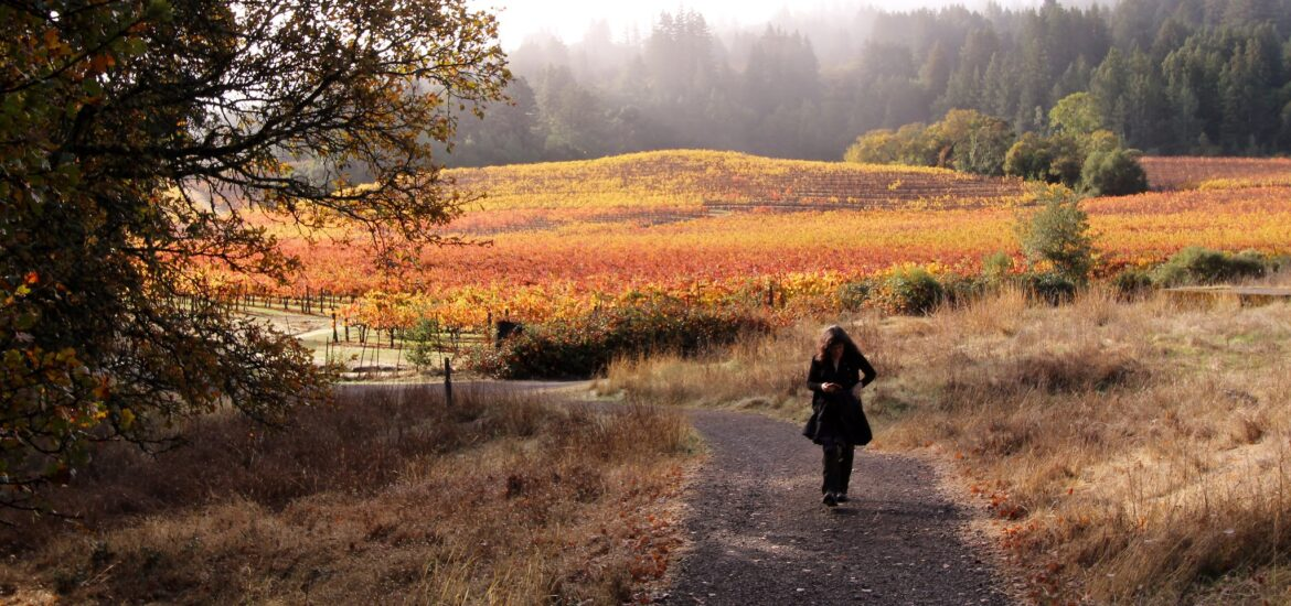 I am in the Sonoma area with a friend (in this photo) this weekend. We spent the day at the Jack London State Historic Park. It's an absolutely beautiful park on the border of vineyards. The vineyards look spectacular this time of year.